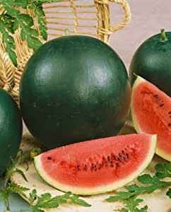 Watermelon/ Kalingad/ Tarbuj Seeds - Kitchen Gardening Seeds By iStoreDirect - Approx 60 Seeds!