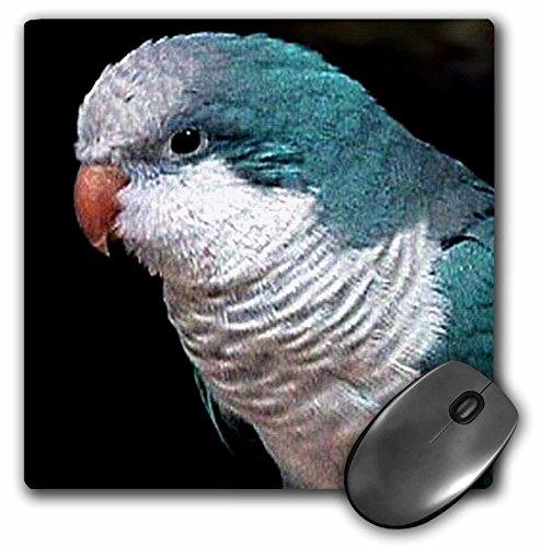 3drose-llc-8-x-8-x-025-inches-mouse-pad-blue-quaker-mp-607-1