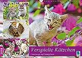 Verspielte Kätzchen: Unterwegs auf Samtpfoten (Wandkalender 2018 DIN A3 quer): Katzen: einzigartige Schönheit und Geschmeidigkeit (Monatskalender, 14 ... [Kalender] [Apr 15, 2017] CALVENDO, k.A.