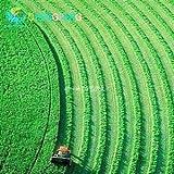 200 Stück Rasen Grass Seeds Golf Fußball Felder Villa Evergreen Rasensamen Schöne Gras Bonsai Blumen Pflanz DIY Ihr Garten
