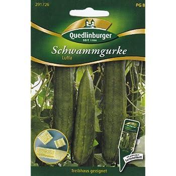 Luffa Cylindrica 10 Samen GRÜN Schwammgurke Sponge Gourd