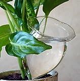 4 Durstkugeln Bewässerungskugeln Durstkugel Pflanzensitter GFGR - GlasDeko24