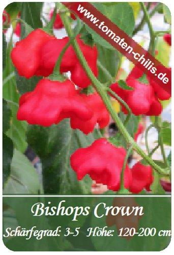 Chili Samen - 15 Stück - Bishops Crown