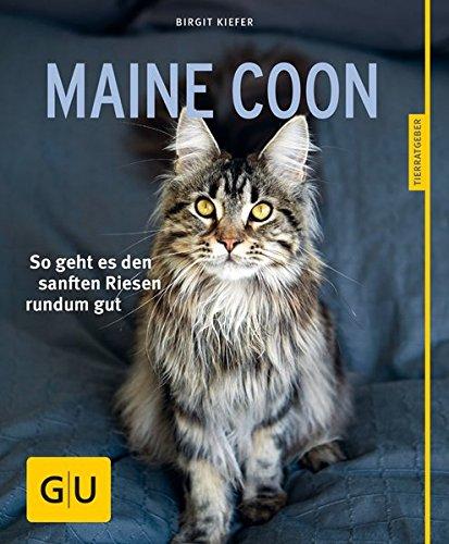 maine-coon-so-geht-es-den-sanften-riesen-rundum-gut