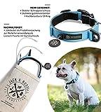 Jack & Russell Premium Hundehalsband Luna reflektierend und Neopren gepolstert Hunde Halsband div. Größen und Farben (Halsumfang S (28-35 cm), Hellblau)