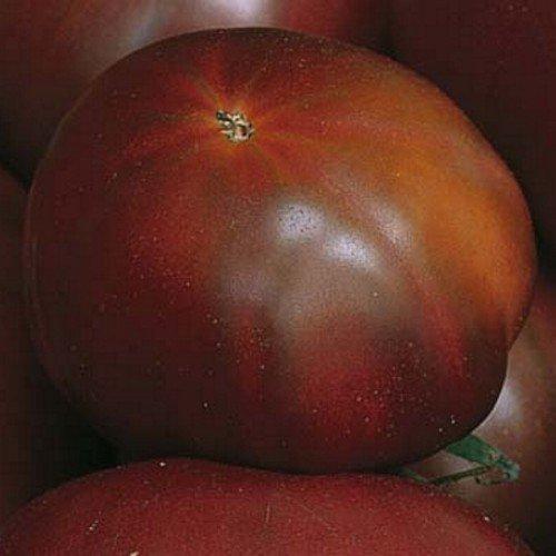 Brandywine schwarz, black - Fleischtomate - 20 Samen