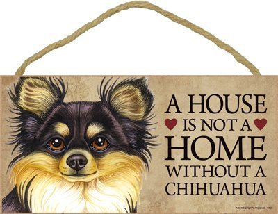 e without Chihuahua (Long haired, black and tan) - 5