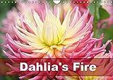 Dahlia's Fire (Wall Calendar 2019 DIN A4 Landscape): Amazing dahlia portraits in transparent frames (Monthly calendar, 14 pages ) (Calvendo Nature)