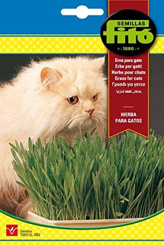 semillas-fito-4262-hierba-para-gatos