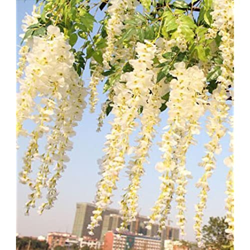 Wedding reception decor amazon 12pcslot artificial 105cm home decor wisteria silk flower holiday decoration weddings events simulation flower white by fatcolo junglespirit Gallery