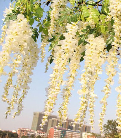 fatcolor 12pcs/lot Artificial 105CM home decor Wisteria silk flower holiday decoration weddings amp; events simulation flower (White) by FatColo