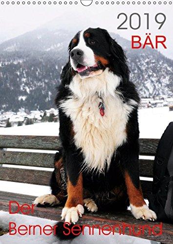 BÄR - Der Berner Sennenhund (Wandkalender 2019 DIN A3 hoch): Fotokalender mit Hundefotografien (Monatskalender, 14 Seiten ) (CALVENDO Tiere)