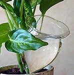 4 Durstkugeln Bewässerungskugeln Durs...