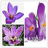 Vendita! 200pcs 10 tipi Bonsai zafferano Semi genuino al 100% sementi biologiche fiore in fiore pianta da giardino