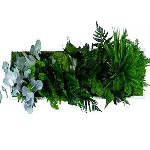 cadre-vegetal-nature-20-x-70cm-composes-de-plantes-naturelles-stabilisees-sans-aucun-entretien-ni-ar