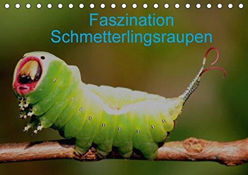 Faszination Schmetterlingsraupen (Tischkalender 2018 DIN A5 quer): In diesem Kalender werden seltene Raupen von Tag- und Nachtfaltern vorgestellt ... [Kalender] [Apr 01, 2017] Erlwein, Winfried