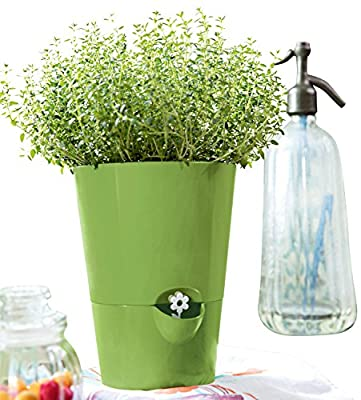 Emsa Kräutertopf für frische Kräuter, Selbstbewässerung, Wasserstandsanzeiger, Fresh Herbs