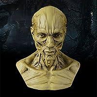 risingmed 10cm Echthaar Anatomische Anatomie Skull Head Muscle Knochen Medical Künstler Zeichnen Skelett Muscle... preisvergleich bei billige-tabletten.eu