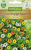 Chrestensen Schwarzäugige Susanne 'Mischung'