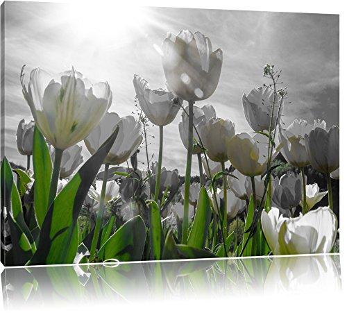 wunderschöne Tulpenwiese schwarz/weiß, Format: 120x80 auf Leinwand, XXL riesige Bilder fertig gerahmt mit Keilrahmen, Kunstdruck auf Wandbild mit Rahmen, günstiger als Gemälde oder Ölbild, kein Poster oder Plakat