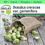 SAFLAX - Garden to Go - BIO - Rosenkohl - Groninger - 30 Samen - Mit Tontopf, Untersetzer, Anzuchtsubstrat und Dünger - Brassica oleracea var. gemmifera