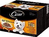 Cesar Hundefutter Feines im Frischebeutel / Nassfutter für eine 100% ausgewogene Mahlzeit / Variation in 4 Sorten (Huhn, Rind, Truthahn und Lamm) mit Gemüse in Sauce / 48 Portionsbeutel (2x24x100g)