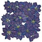Pressed real dried flowers, 20 pieces, blue Delphinium