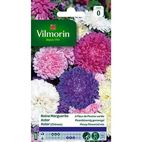 Vilmorin - Sachet graines Reine Marguerite à fleur de Pivoine variée