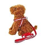 NAttnJf Haustier-Katzen-Hund justierbarer reflektierender gehender Gurt Brustgurt mit Leine Rot M