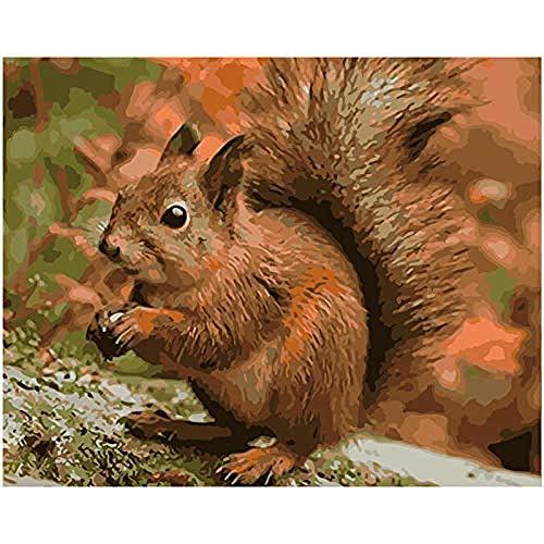 Braune Kostüm Eichhörnchen - yhwygg DIY Ölgemälde DIY Süße Braune Eichhörnchen Tier Leinwand Hochzeit Dekoration Kunst Bild Geschenk - (40X50Cm) Mit Rahmen Malen Nach Zahlen