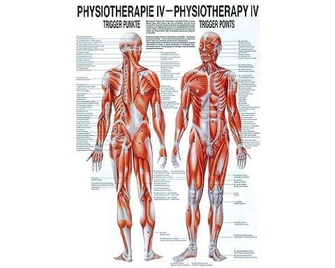 Poster Anatomie - Poster de physiothérapie–Design ergonomique Poster de mini