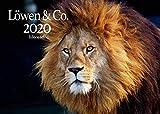 Edition Seidel Löwen & Co. Premium Kalender 2020 DIN A3 Wandkalender Tiere Afrika Löwen Tiger