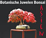 Gewächshaus Botanische Juwelen Bonsai Asien