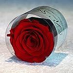 Rosa stabilizzata eterna , fiore naturale nel suo piccolo vaso di fiori e la sua scatola con il suo sacchetto regalo elegante , prodotto premium .