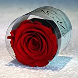 Véritable Rose Naturelle Stabilisée Rouge, Rose éternelle stabilisée , fleur naturelle dans son petit pot de fleur et dans sa box avec son sac cadeau très chic, produit haut de gamme. Bouton de rose : diamètre 6,5 cm hauteur 7 cm, sac cadeau 14 cm x ...