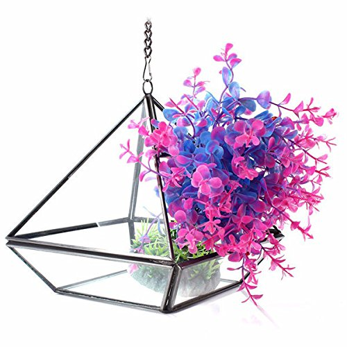 Bazaar Triangle zu Treibhauseffekt Basteln Landschaft Micro Terrarium aus Glas Sukkulente Pflanzen Blumentopf