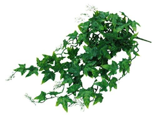 lucky-reptile-jungle-plant-efeu-busch