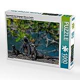 Sonnenbad einer Galapagos Echsen-Familie 1000 Teile Puzzle quer (CALVENDO Natur)