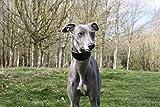 Die trendige Whippet Exklusive schwarz Schaf Leder und weichem Wildleder gepolsterte breit Halsbänder–Whippet, Windhund, Lurcher und italienische Windhund Saluki Windhund Hund