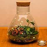 'Urban Botanist | mit Ökosystem, Pflanzen, Terrarium, mit Live -, Fully assembled with live plants and LED lights
