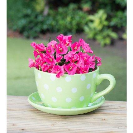 Beautiful Ceramic Teacup & Saucer Planter - Green Polka Dot