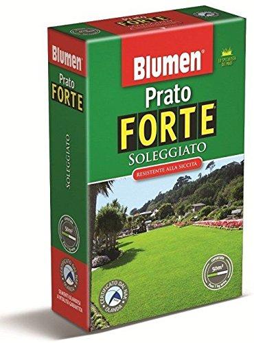 PRATO FORTE SOLEGGIATO - SCATOLA KG 1