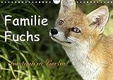 Familie Fuchs hautnah in Berlin (Wandkalender 2019 DIN A4 quer): Füchse in der Stadt leben hautnah mit den dort lebenden Menschen zusammen. (Monatskalender, 14 Seiten ) (CALVENDO Tiere)