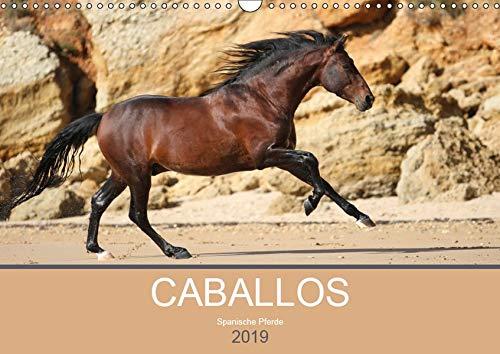 Caballos Spanische Pferde 2019 (Wandkalender 2019 DIN A3 quer): Begeben Sie sich auf eine kleine Reise und entdecken Sie die faszinierenden Pferde in ... (Monatskalender, 14 Seiten ) (CALVENDO Tiere)