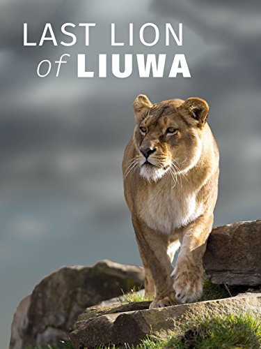 last-lion-of-liuwa