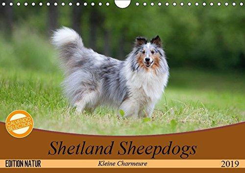 Kleine Charmeure (Wandkalender 2019 DIN A4 quer): Shelties mit besonderem Charme (Monatskalender, 14 Seiten ) (CALVENDO Tiere) ()