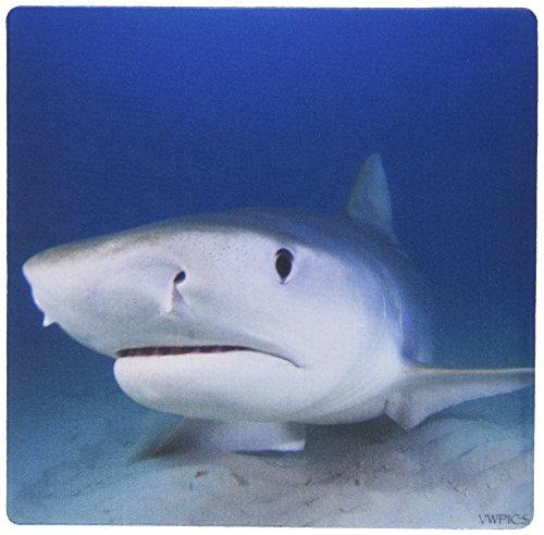 3dRose LLC Mauspad, 20,3 x 20,3 x 0,25 Zoll Tiger Shark Galeocerdo Cuvier Tiger Beach Bahamas Atlantic Ocean Muster (mp_46348_1) -