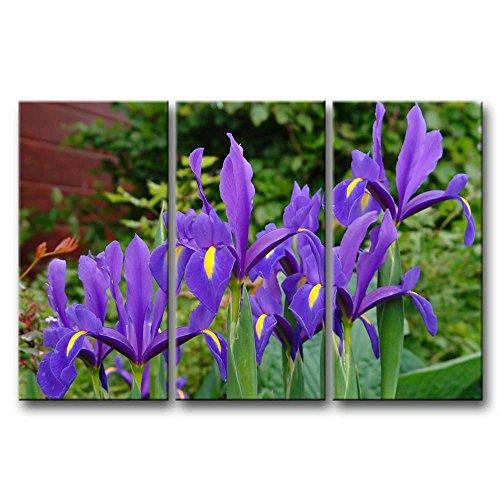 Leinwanddruck Bild für Home Decor Deep Purple Iris 3Stück Gemälde Moderne Giclée-gespannt und gerahmt Artwork Öl die Blume Bild Foto Druck auf Leinwand (Purple Iris-bild)