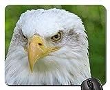 Rectangle Non-Slip Rubber Mouse Pad(9.45x7.8x0.12 Inches) Raptor Adler Bald Eagles Bird of Prey