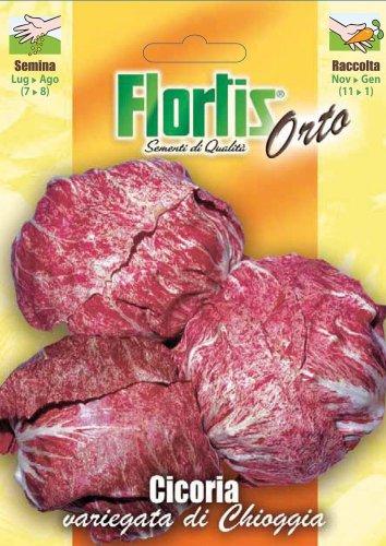 Salatsamen - Blattzichorie Variegata Di Chioggia von Flortis